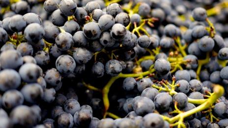 grapes-2104075_1280